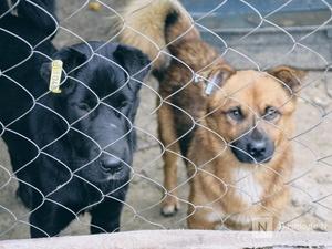 Пристрастие к животным по-выксунски: кому есть дело до постояльцев «Второй жизни»?