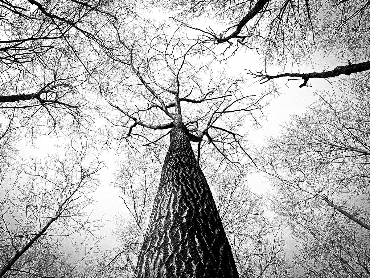 Неопытный пьяный водитель протаранил на «пятнашке» дерево в Арзамасе - фото 1