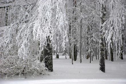 Наступившая неделя принесет нижегородцам переменчивую погоду
