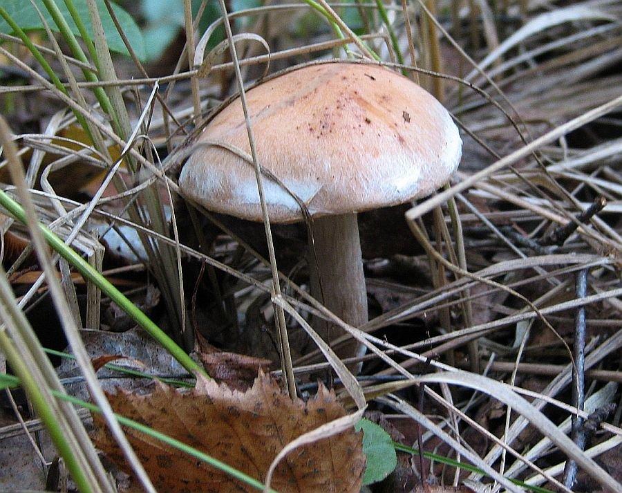 Грибы из нижегородских лесов могут привести к онкологическим заболеваниям - фото 1