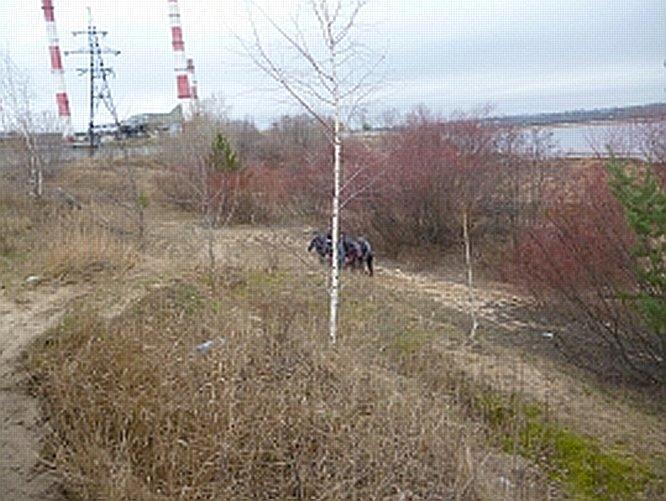 Тело мужчины обнаружили в реке Везломе на Бору - фото 1