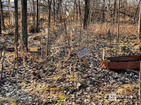 Православный крест над котом: где находится нижегородское кладбище домашних животных - фото 12
