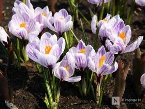Главный нижегородский синоптик рассказала, каким будет апрель