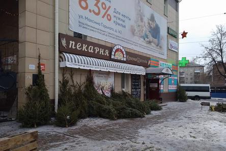 Администрация проконтролирует уборку брошенных елей в Нижнем Новгороде