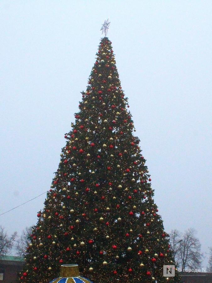 Главную нижегородскую новогоднюю елку снова поменяют - фото 4