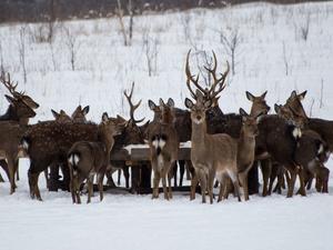 «Перепись» диких животных стартовала в Нижегородской области