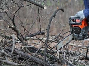 Чкаловский браконьер пойдет под суд за 15 спиленных деревьев