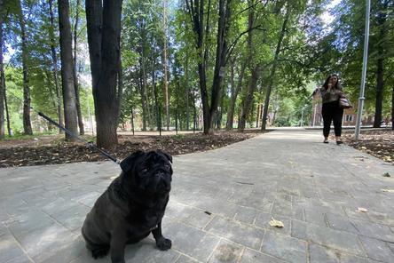 Площадку для выгула собак обустроили на улице Бекетова в Нижнем Новгороде