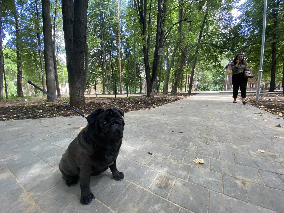 Площадку для выгула собак обустроили на улице Бекетова в Нижнем Новгороде - фото 1