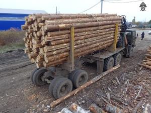 Упавшее бревно убило водителя лесовоза в Шахунье