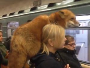 Прокатившаяся в метро лиса попала на видео