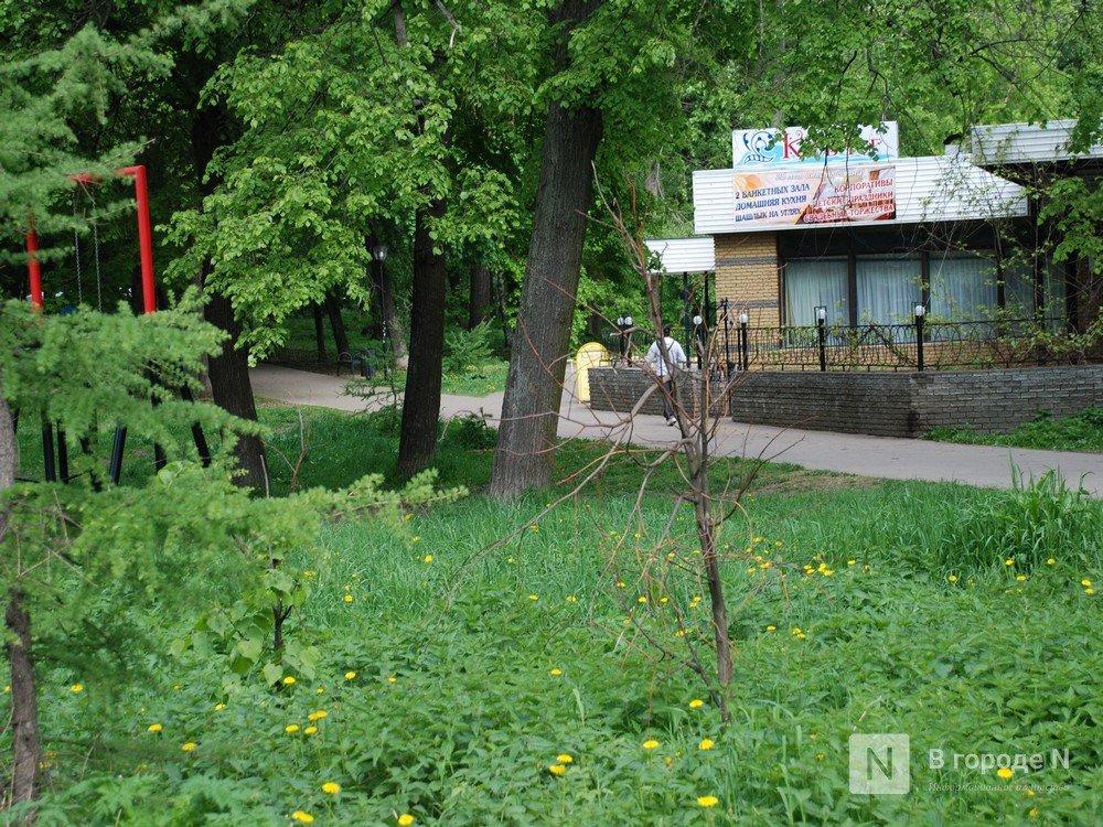 Сухостой и нехватка лавочек: нижегородцы назвали главные проблемы парка Кулибина - фото 12