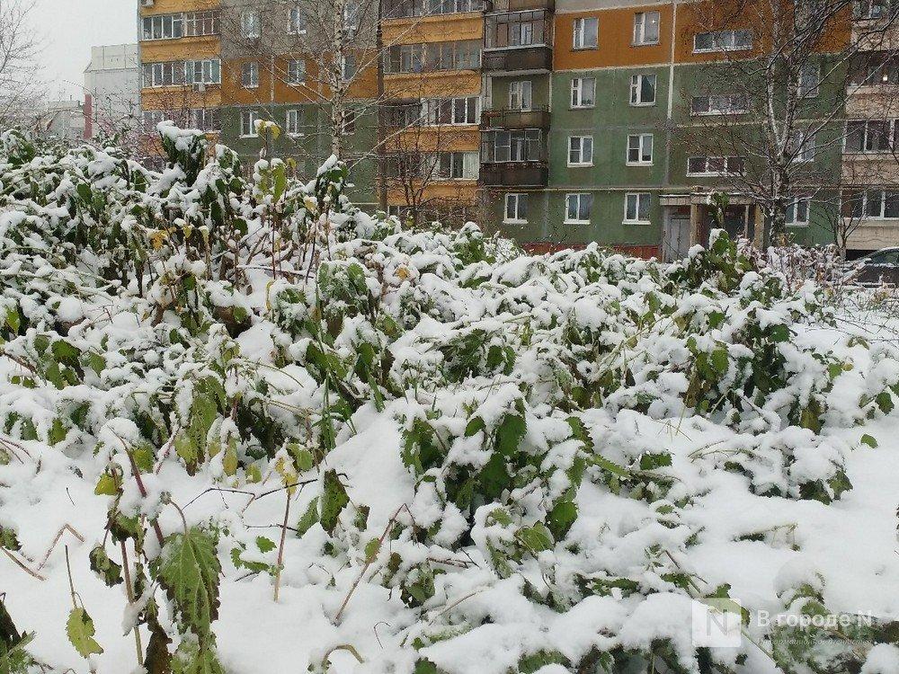 Нижегородский портал «Антиснег» активизировался после первых зимних осадков - фото 1