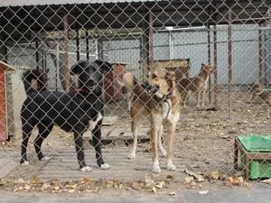 Количество бродячих собак в Нижнем Новгороде снизилось на 40%