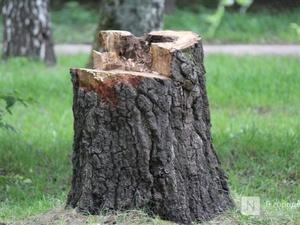 Варнавинского лесоруба оштрафовали за пять деревьев