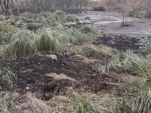 Административное расследование проводится по факту разлива мазута в Кстовском районе