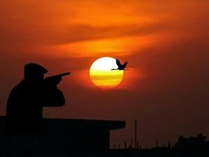 В Госдуме предложили разрешить охотиться на животных из Красной книги
