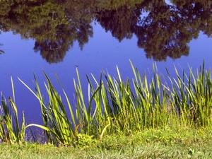 Мертвый работник кстовской строительной компании обнаружен на берегу пруда Шелокшанки