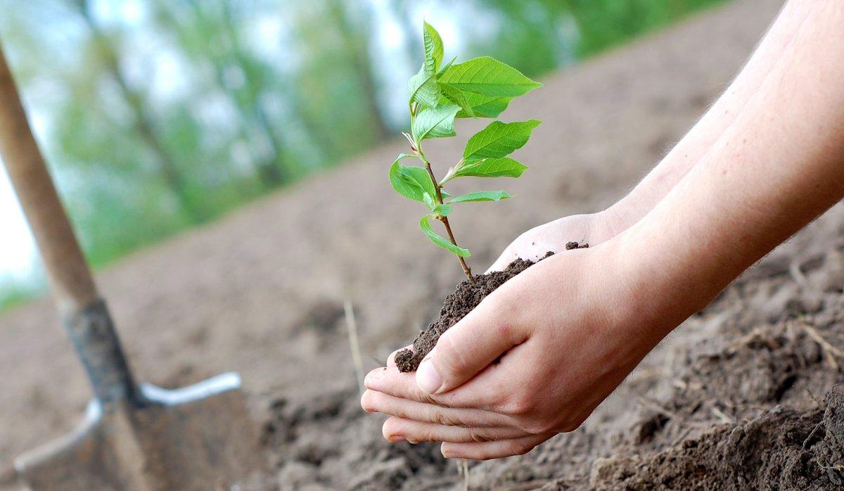 Кампания «Сохраним лес» позволит высадить 200 тысяч деревьев вНижегородской области