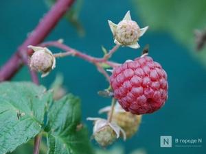 Новые сады появятся в Нижегородской области